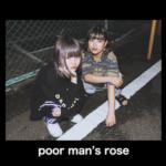 poor man's rose